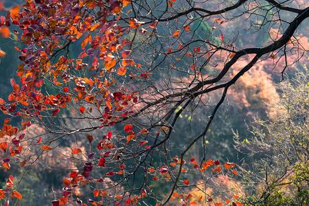 秋の木の枝