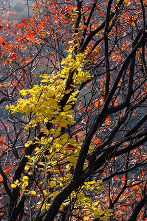 秋の木 写真素材