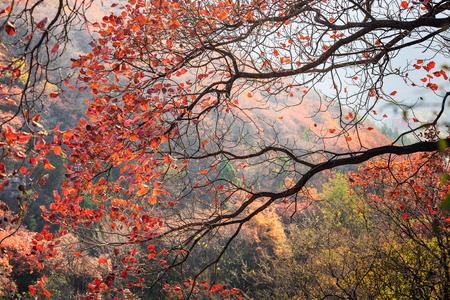 秋の山のシーン
