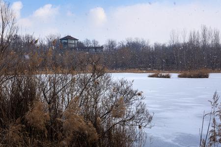 Wetland snow scenery