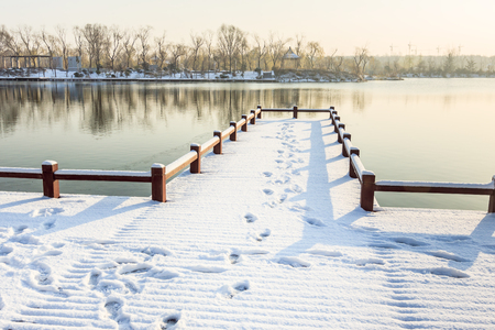 The snow of the wetland