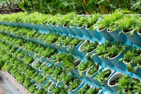 Three dimensional planting of vegetables