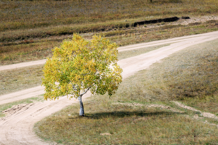 Trees on the prairie of Bashang