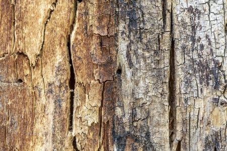 Dead wood texture