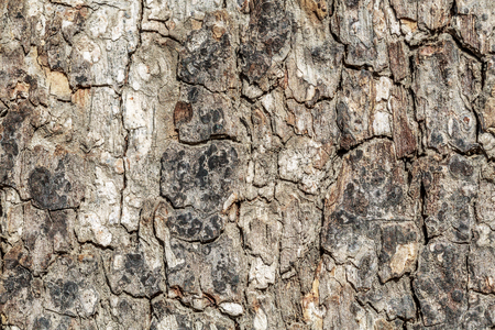 Rough old bark texture