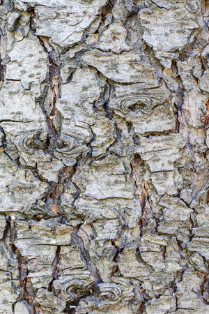 Rough old bark texture