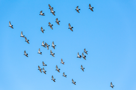 Dove flying on the blue sky