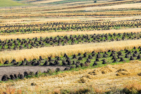 Terraced fields on the roadside of Zhangbei Prairie