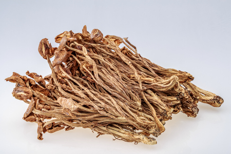 Dry tea tree mushroom Stok Fotoğraf - 115142960