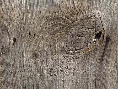 The beautiful texture of old gray wood with knots and rusty hats of hammered nails is in the photo Stock Photo
