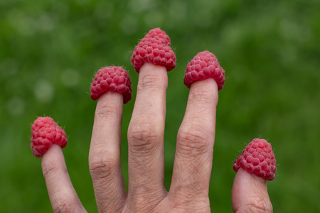 A fun photo of five red ripe fresh raspberry berries were put on five fingers on a green plants background in a summer garden Stock Photo