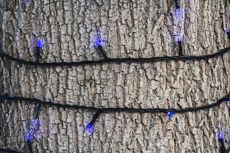 A beautiful horizontal texture of gray bark of old tree with knots and cracks and burning blue LED lamps of a black garland and is in the photo.