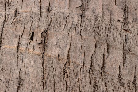 The beautiful brown texture of the trunk of the big Cocos nucifera palm Foto de archivo