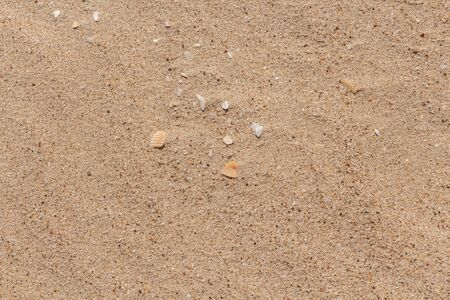 A beautiful horizontal texture of yellow sand with waves and shells is in the photo