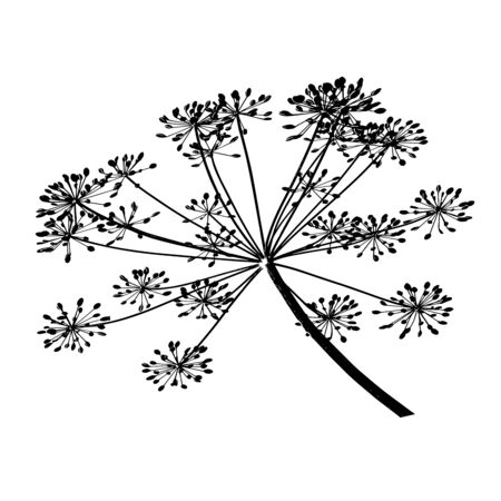 One black branch of dill seeds is on a white background