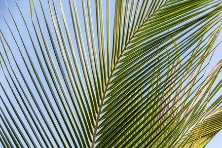 The beautiful big Cocos nucifera palm leaf is on the beach orange sunrise sky background