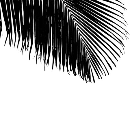A black vector illustration of a big Cocos nucifera palm leaf on the white background