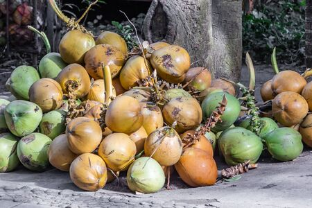 A bunch of green and orange fresh coconuts is on the gray ground under a palm tree