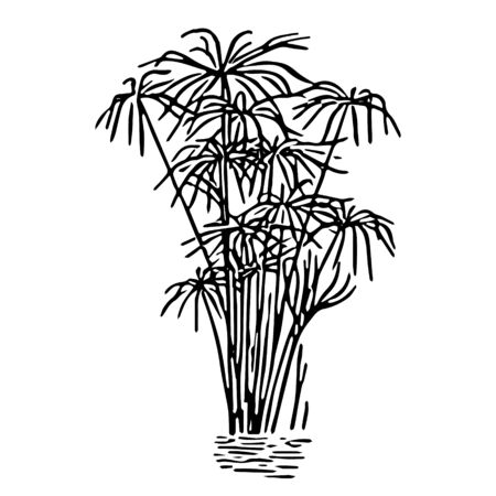 A Black outline hand drawing vector illustration of a decorative plant paper reed in the water isolated on a white background Ilustração