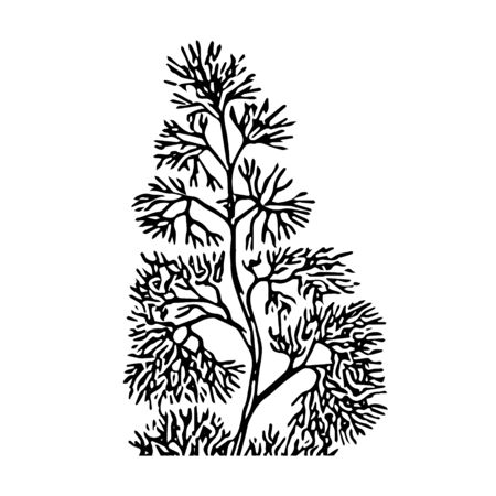 A Black outline hand drawing vector illustration of an aquatic decorative plant in the ground in aquarium isolated on a white background
