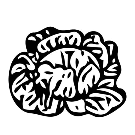 A Vector outline illustration of a black fresh cabbage is on a white background