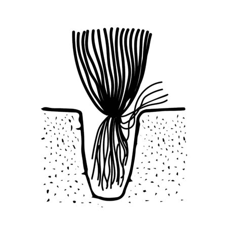 A Black outline hand drawing vector illustration of an aquatic decorative plant with roots transplanting in the ground in aquarium isolated on a white background