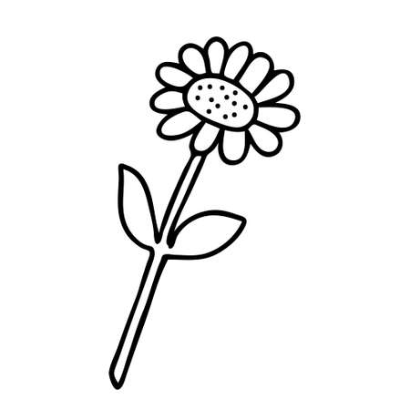 A Vector illustration of one black chamomile flower isolated on a white background