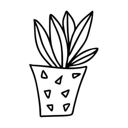 A Black outline hand drawing vector illustration of a decorative plant Sansevieria in a pot isolated on a white background