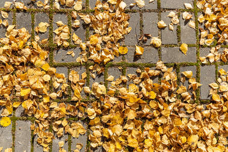 A texture of gray paved path with orange and yellow leaves is in the park in autumn