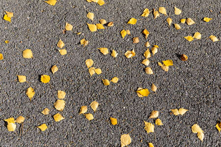 A texture of gray asphalt with orange and yellow leaves is in the park in autumn