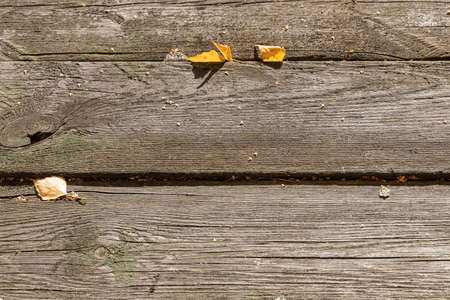 A A beautiful horizontal texture of old gray boards with yellow leaves is in fall Archivio Fotografico