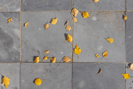 A Texture of gray marble path with orange and birch yellow leaves and seeds is in the park in autumn Archivio Fotografico - 158571783