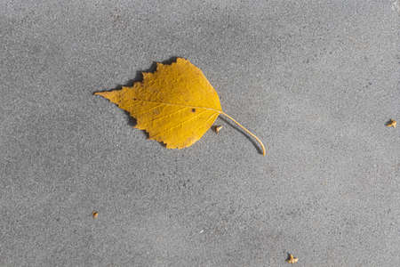 A Texture of gray marble path with one birch yellow leaf and seeds is in the park in autumn