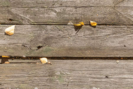 A beautiful horizontal texture of old gray boards with yellow leaves is in fall
