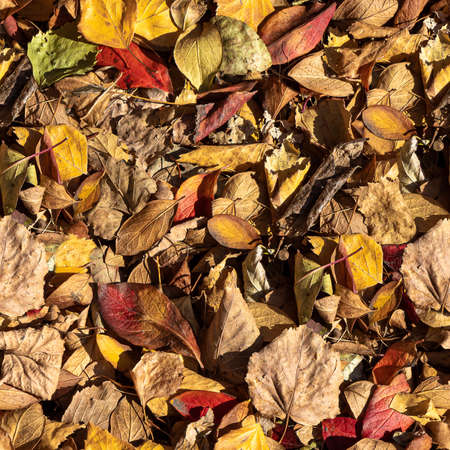 A beautiful texture of dry brown and yellow autumn oak leaves is in the park. Seamless pattern Archivio Fotografico