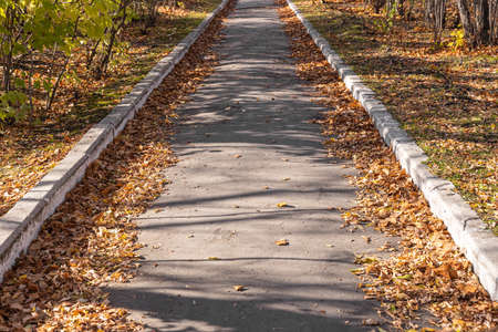A Gray trail with yellow leaves among trees is in an autumn