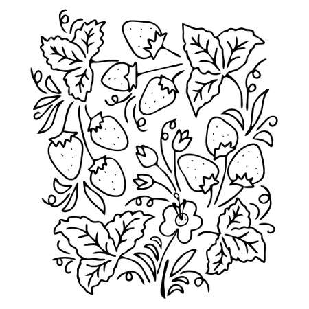 The Black Vector outline set of strawberries and leaves and flowers isolated on a white background