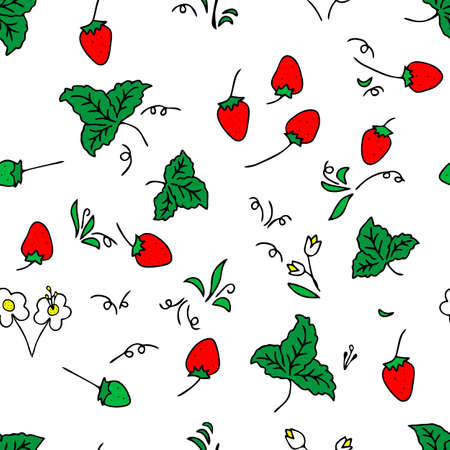 The Seamless colored Vector outline pattern of strawberries and leaves and flowers isolated on a white background
