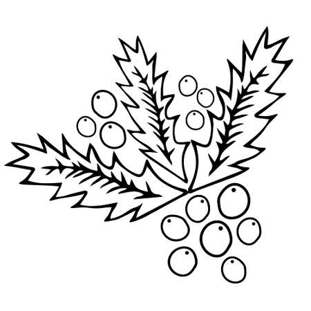 A Black outline hand drawing vector illustration of a carved Christmas holly plant isolated on a white background