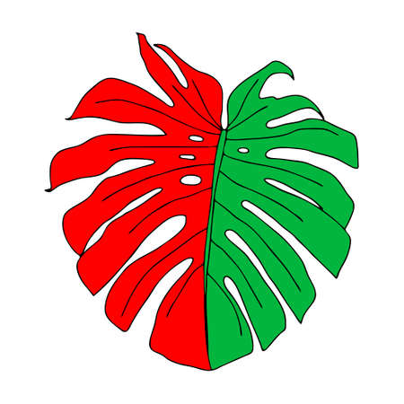 An Illustration of a green and red leaf monstera isolated on a white background