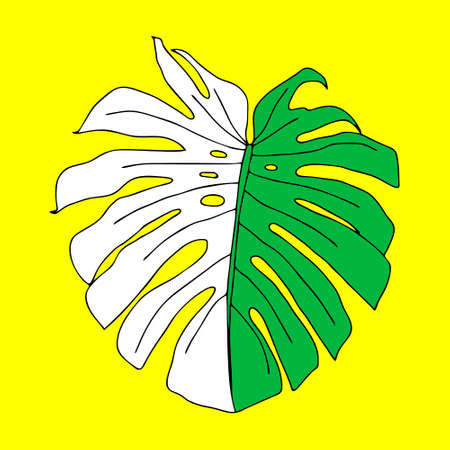 An Illustration of a green leaf monstera isolated on a yellow background