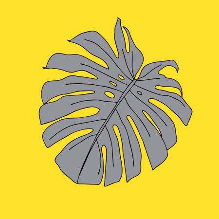 An Illustration of a gray leaf monstera isolated on a yellow background.
