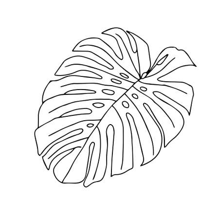 An Illustration of a black leaf monstera isolated on a white background Vettoriali