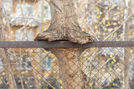 The brown tree trunk is embedded in a metal fence mesh