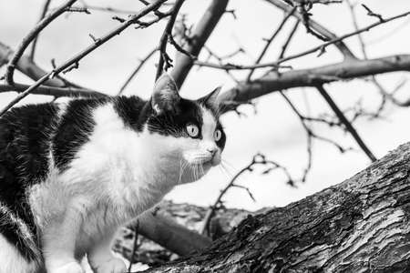 A beautiful adult young black and white cat with big eyes scrambles on a tree in the garden in autumn