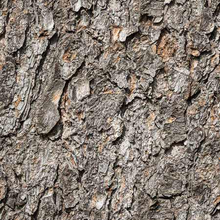 A Seamless pattern of texture of brown bark of old tree with knots and cracks is in the photo