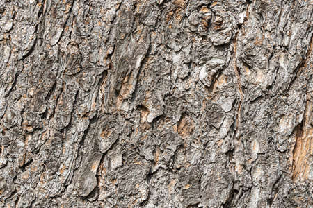 A Texture of brown bark of old tree with knots and cracks is in the photo Archivio Fotografico