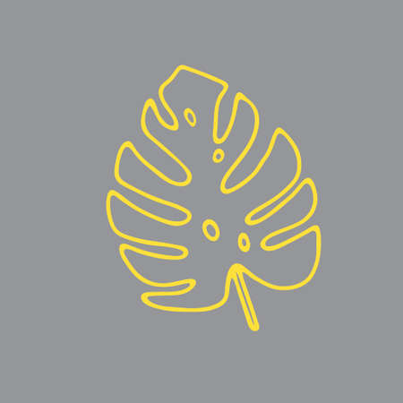 Illustration of a yellow leaf monstera isolated on a gray background