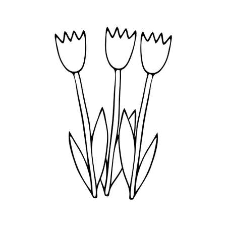 A Black Vector illustration of a group of three tulip flowers with leaves isolated on a white background Vettoriali