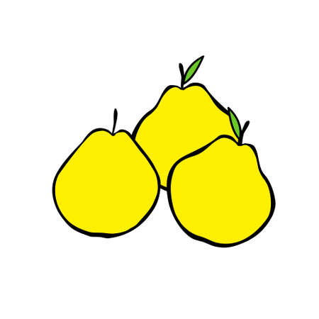 A Vector outline illustration of group of three yellow pears with leaves isolated on a white background